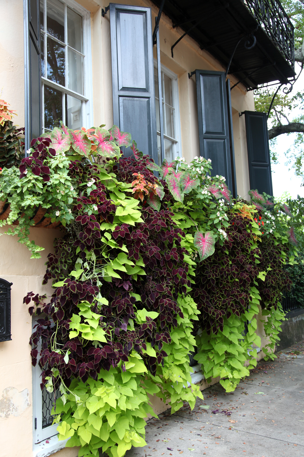Charleston Part 3 Window Boxes Vines Amp One Playful