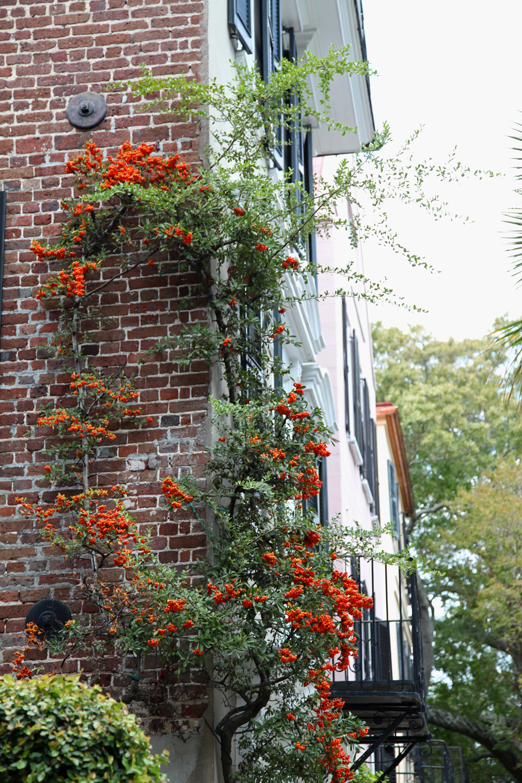 Charleston Part 3 Window Boxes Vines Amp One Playful