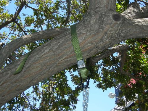 tire swing kits for trees 3