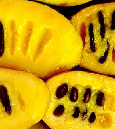 pawpaw fruit fruit jokes