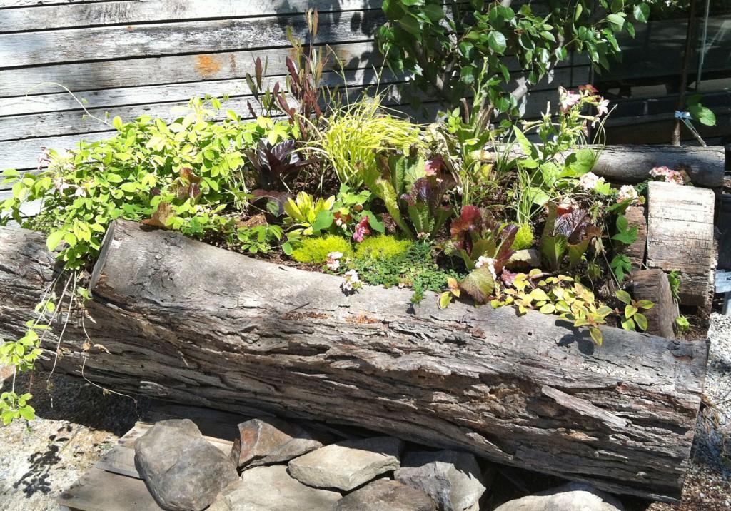 springlogplanter-terrain2
