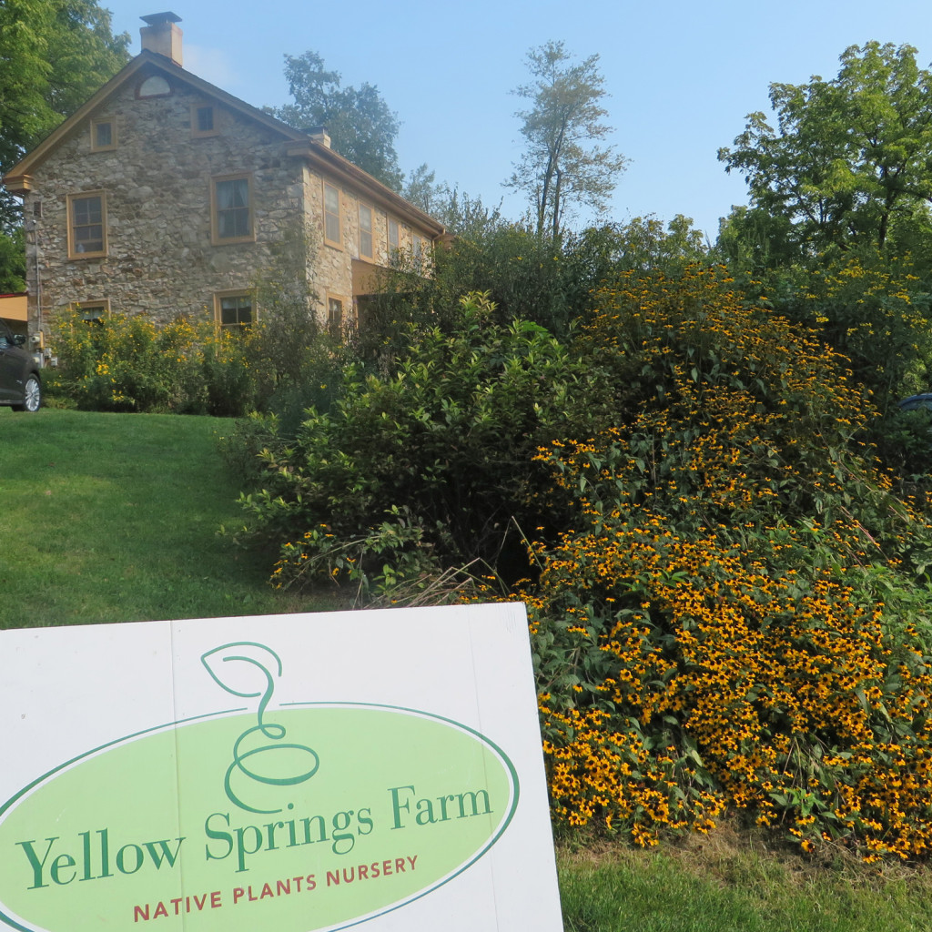 YellowSpringsFarm1