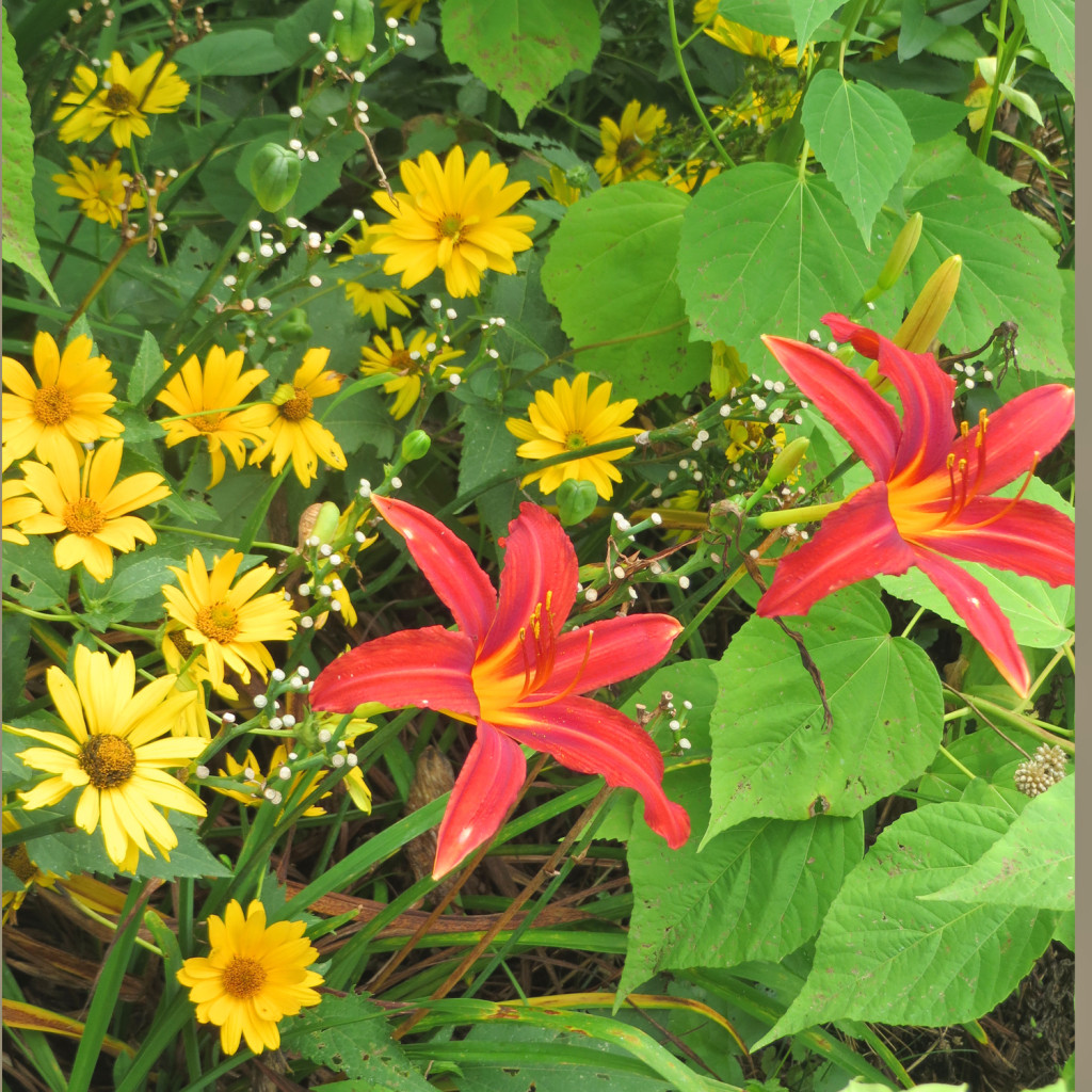 garden-september02